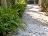 beech_ fern been with tabby walkway.jpg