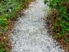 Cole_ shell sand path through native garden