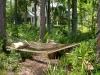 Cole_hammock in native plant garden