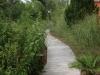 Jager_landscape architecture_kiawah island_boardwalk through native plant garden (2)