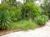 Jager_landscape architecture_kiawah island_custom stone curb with native grasses and plants