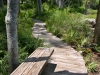 Lindsay _ boardwalk through native plants with bench.jpg