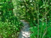 Lindsay _ path through native plant garden.jpg