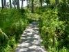 Lindsay_ boardwalk through native plants.jpg