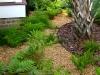 Livingston_ fern garden with palm