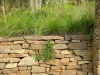 paris mountain_greenville_south carolina_stone retaining wall with native grasses and prostrate rosemarry