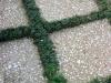 Shedlarz_tabby and mondo grass green grid.jpg
