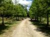 Willingham Plantation_Allendale South Carolina_landscape architecture_master plan_bald cypress allee.jpg